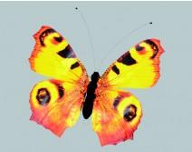 Papillon géant jaune et noir