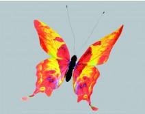 Papillon géant orange et noir