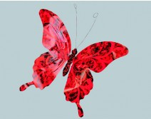 Papillon géant rouge et noir